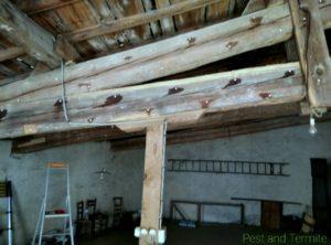 Traitement termites intérieur bois